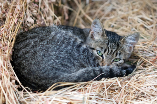 Is Catnip Good For Your Cat?