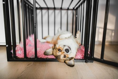 The Basics Of Dog Crate Training
