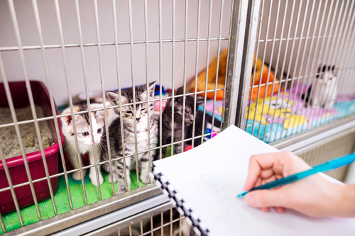 Kitten Care: The Responsibilities of a Pet Owner