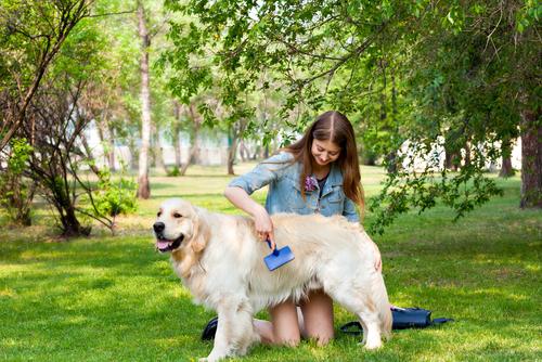 Why We Love Large Dog Breeds